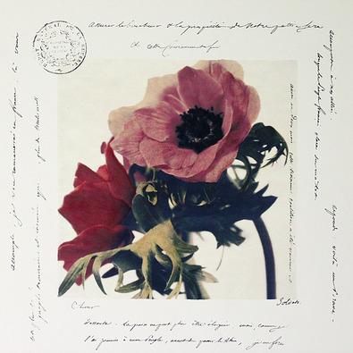 Claire Lerner 4er Set 'Anemone I + II' + 'Scripted Gerbera I + II'