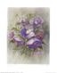 Neswadba gerhard lila anemonen medium