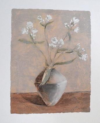 Antonio Ferralli White Phlox