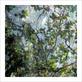 Le beuan benic nicolas vegetaux viii 2007 medium