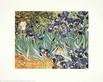 Van gogh vincent irises medium