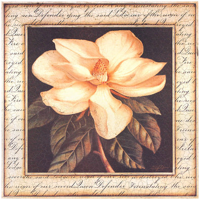 Sid Dickens Ancient Magnolia
