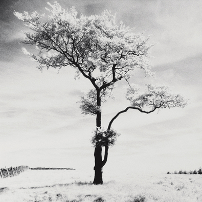 Dave Butcher Lone Tree # 3, Peak District, England