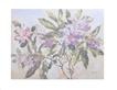 Eileen Crawfurd Rhododendron