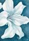 Lake kaye wistful lily ii medium