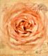 Bekannt nicht rose parfum medium