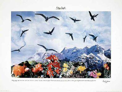 Peter Hutchinson A Dozen Seagulls