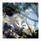 Le beuan benic nicolas vegetaux iv 2007 medium
