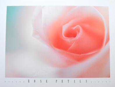Kihara Kazuto Rose Petals