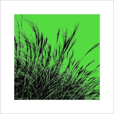 Davide Polla Grass (gruen), 2011 II