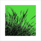 Polla davide grass gruen 2011 ii medium