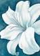 Lake kaye wistful lily i medium