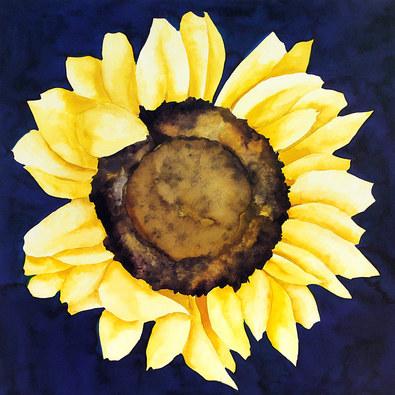 Nicht bekannt Sonnenblume