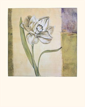Julian Marcoux 4er Set 'Daffodil I' + 'Amaryllis I' + 'Peony I' + 'Tulip III'