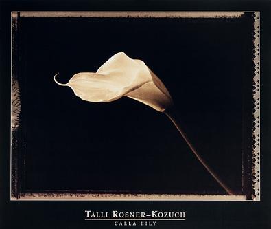 Talli Rosner-Kozuch Calla Lily