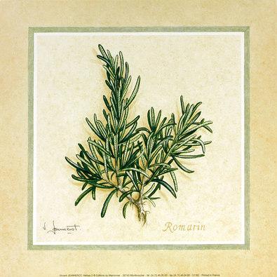 Vincent Jeannefrot Herbes 2 (Rosmarin)