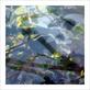 Le beuan benic nicolas vegetaux vi 2007 medium