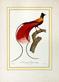 Jacques Barraband L'Oiseau de Paradis rouge