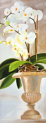 Karsten Kirchner Orchideen