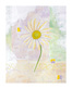 Sanderini 2er set marguerite sunflower medium
