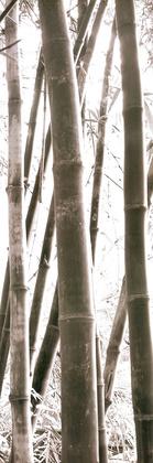 Douglas Yan Bamboo Grove IV