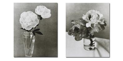 Doug Benezra 6er Set 'Ivory Peonies I + II' + 'Ivory Calla Lilies' + 'Ivory Tulips' + 'Ivory Freesia' + 'Ivory Chrysanthemum'