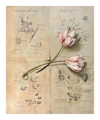 Fabrice de Villeneuve Botanist's Study II