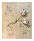 De villeneuve fabrice botanist s study ii medium
