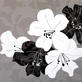 Kate Knight 2er Set 'Monochrome Lily Collage' + 'Monochrome Tulip Collage'
