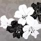 Kate Knight 2er Set 'Monochrome Lily Collage' + 'Monochrome Tulip Collage'