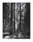 unbekannter Kuenstler Waldlandschaft