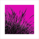 Polla davide grass magenta 2011 medium