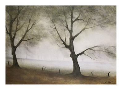 Nicht bekannt Baeume im Nebel