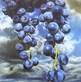 Kneffel karin trauben vor himmel medium