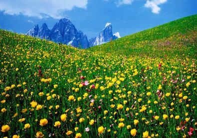 Nicht bekannt A Valley of Flowers, Dolomites