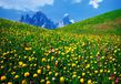 Bekannt nicht a valley of flowers dolomites medium