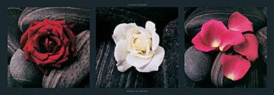 Laurent Pinsard Roses on stones