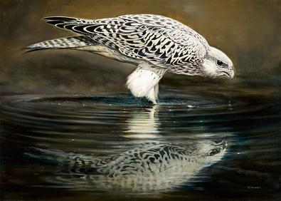 Renato Casaro Drinking Falcon