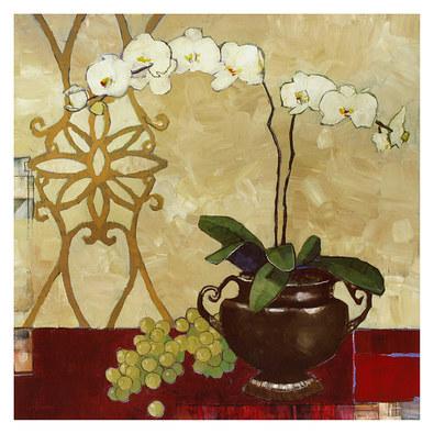 Ibarra gabriela ornamental orchid large