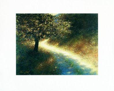 Lutz Muenzfeld Waldweg im Sonnenlicht (Buettenpapier)