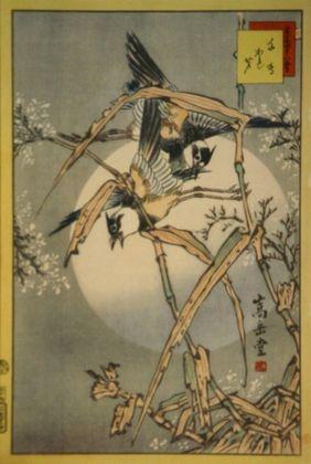 Sugakudo regenpfeifer und duerres schilfrohr large