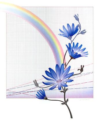 Schlichtholz Rainbow
