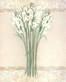 Elisabeth Brownd White Mirage I