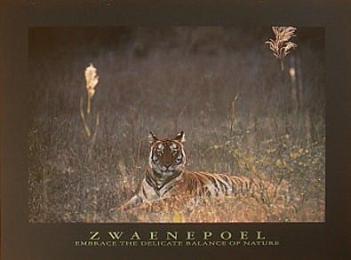 Bruce Coleman Bengalischer Tiger