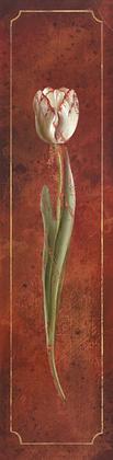 Fabrice de Villeneuve Tulip Rouge