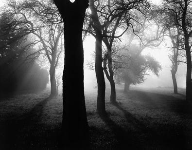 Tom Weber Baeume im Nebel I