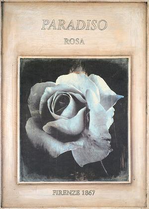 Stuart McQueen Rosa - Firenze 1867