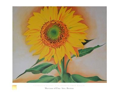 Georgia O'Keeffe Eine Sonnenblume von Maggie