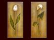 Lewman Zaid 2er Set 'Tulip' + 'Calla'