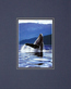 Wolfe art humpback whale medium
